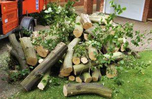 hertfordshire-tree-company-15-300x196
