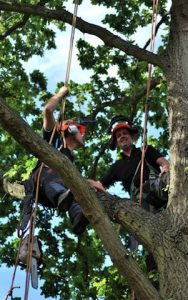 hertfordshire-tree-company-23-188x300