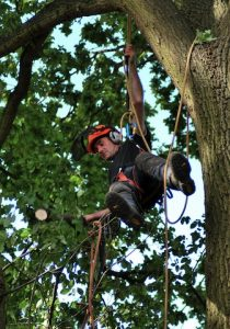hertfordshire-tree-company-24-210x300
