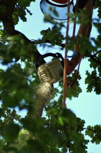 hertfordshire-tree-company-25-199x300