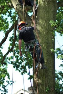 hertfordshire-tree-company-29-201x300