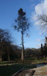 treefelling1-188x300