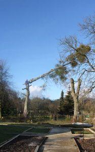 treefelling2-188x300