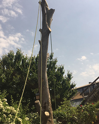 Tree felling Sussex